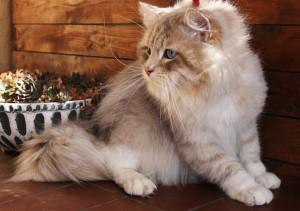 Figaro Viva Klarysa*PL