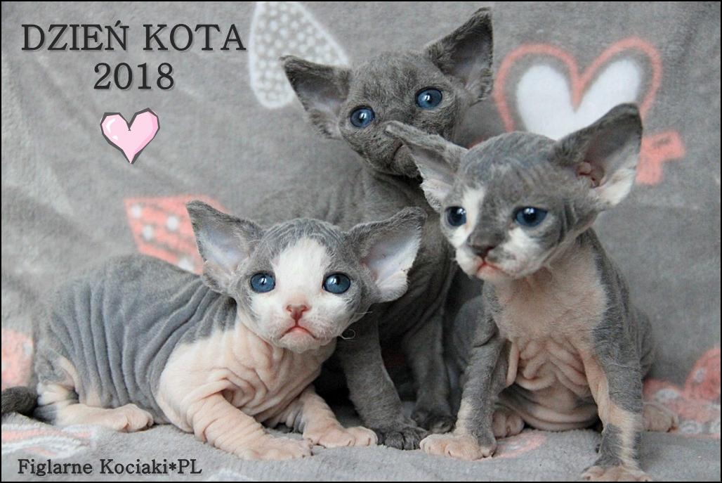 Dzień Kota 2018